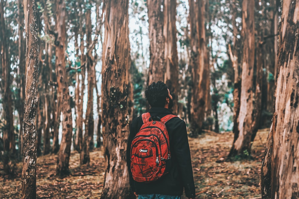 man looking on tree in forest