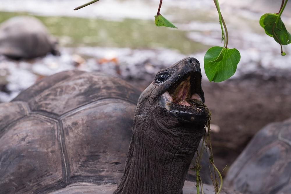 turtle picking green leaf