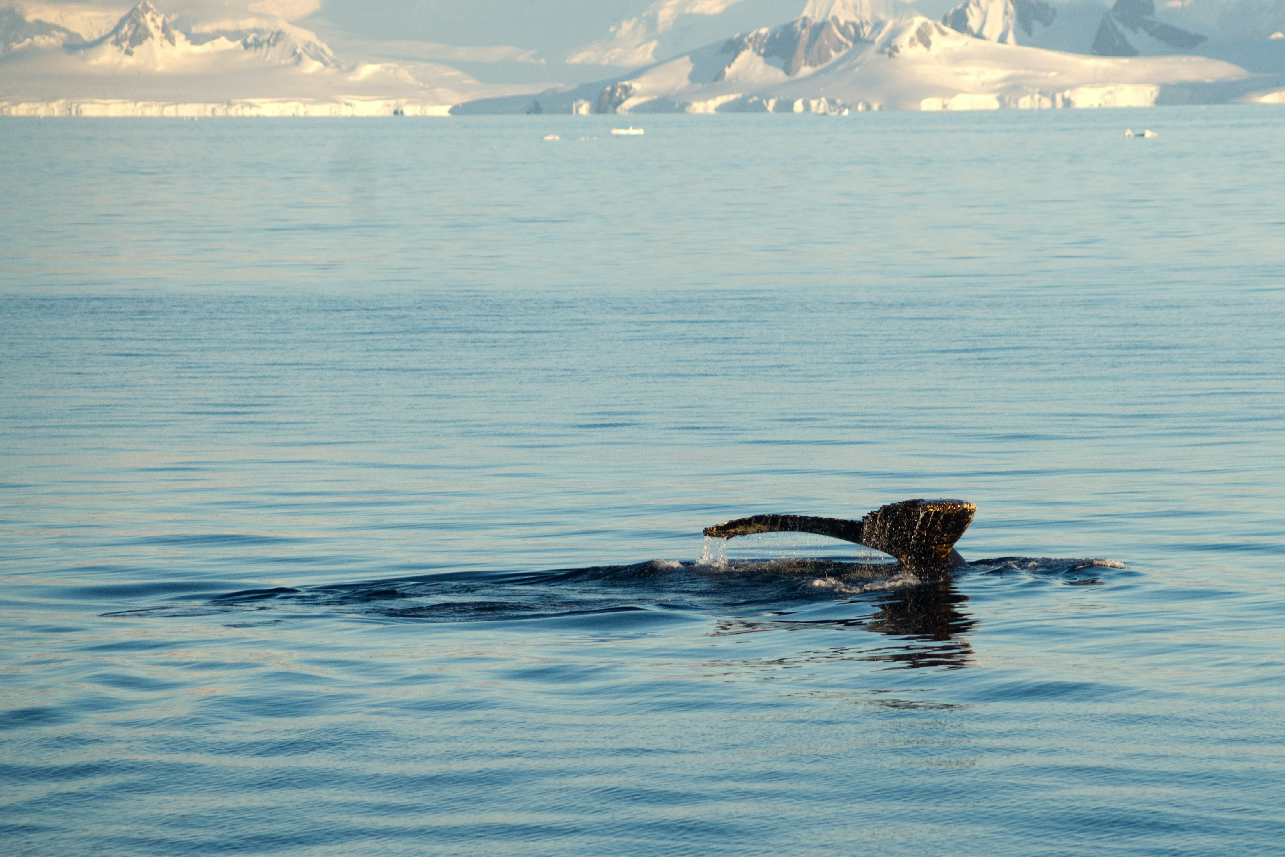 brown fish swimming on body of water with distance to glacier mountain during daytime