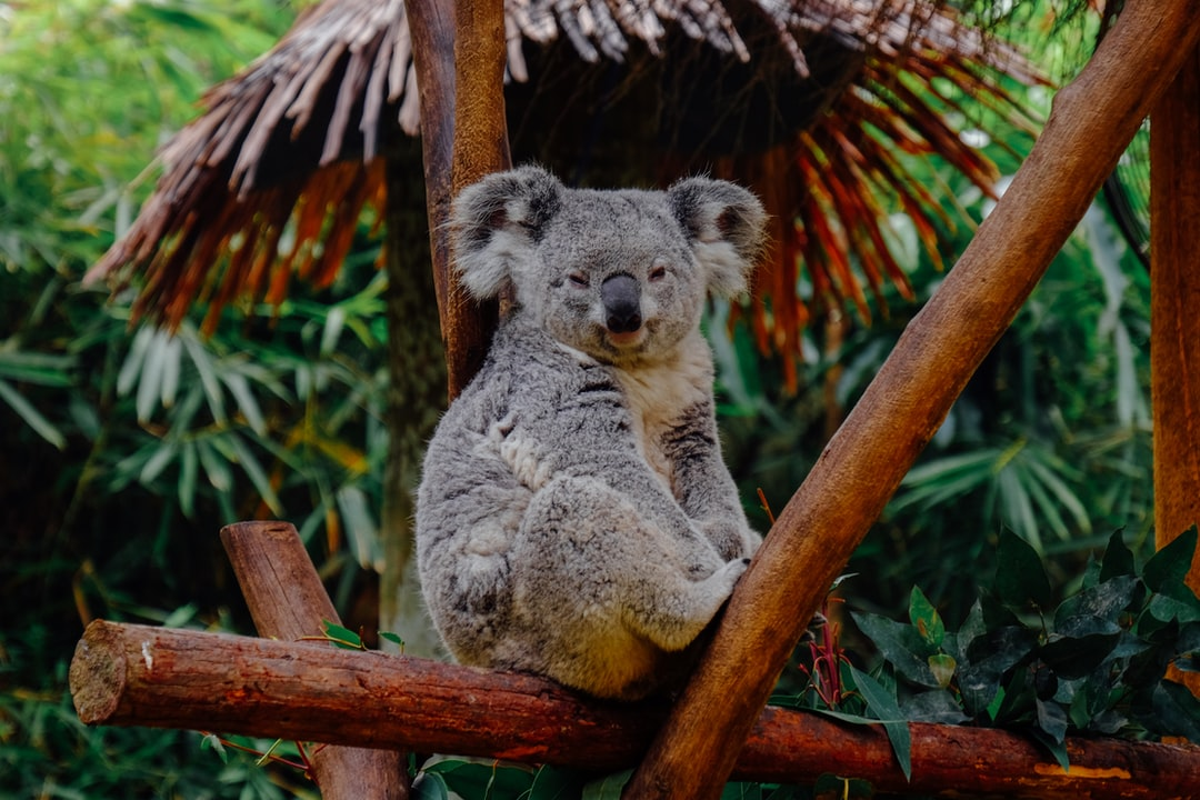 Koalas, quand Spark déclare sa flamme à Pandas !