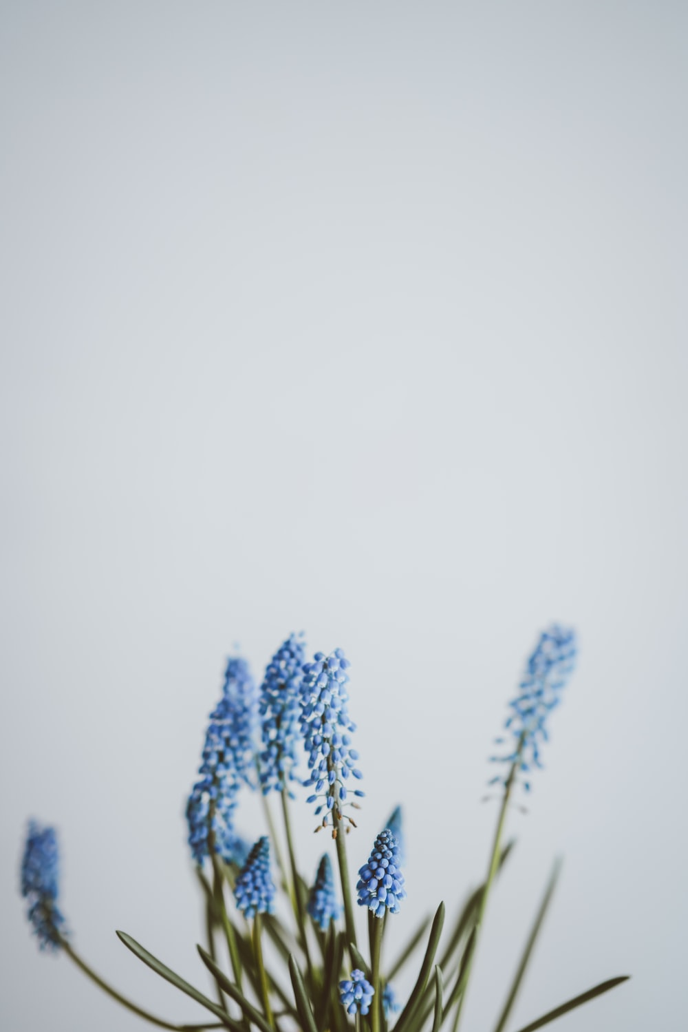 selective focus photography of blue petaled flower in bloom