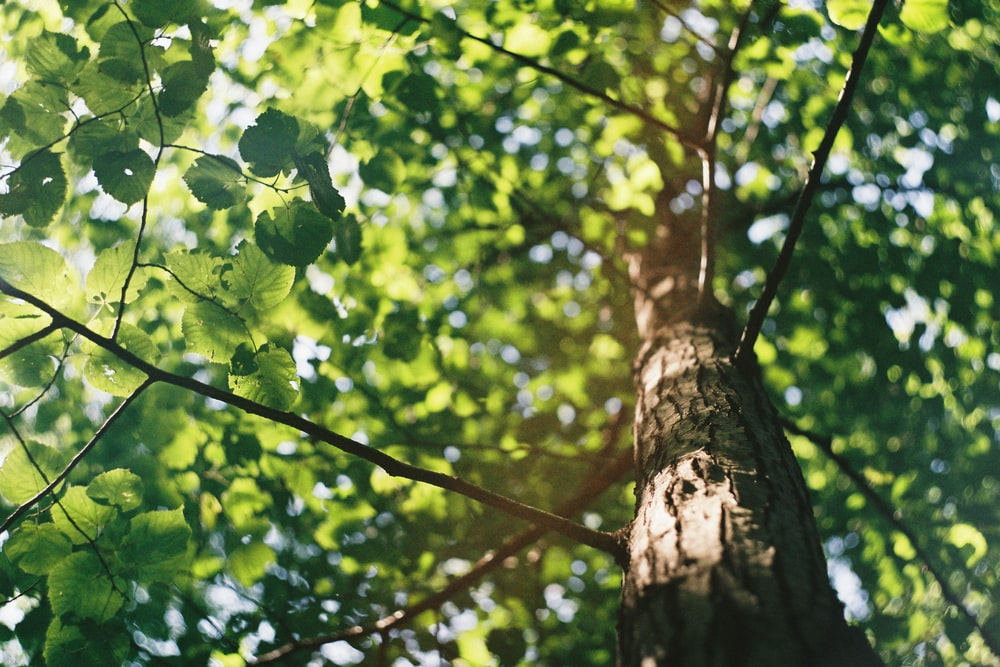 macro shot photography of tree during daytime