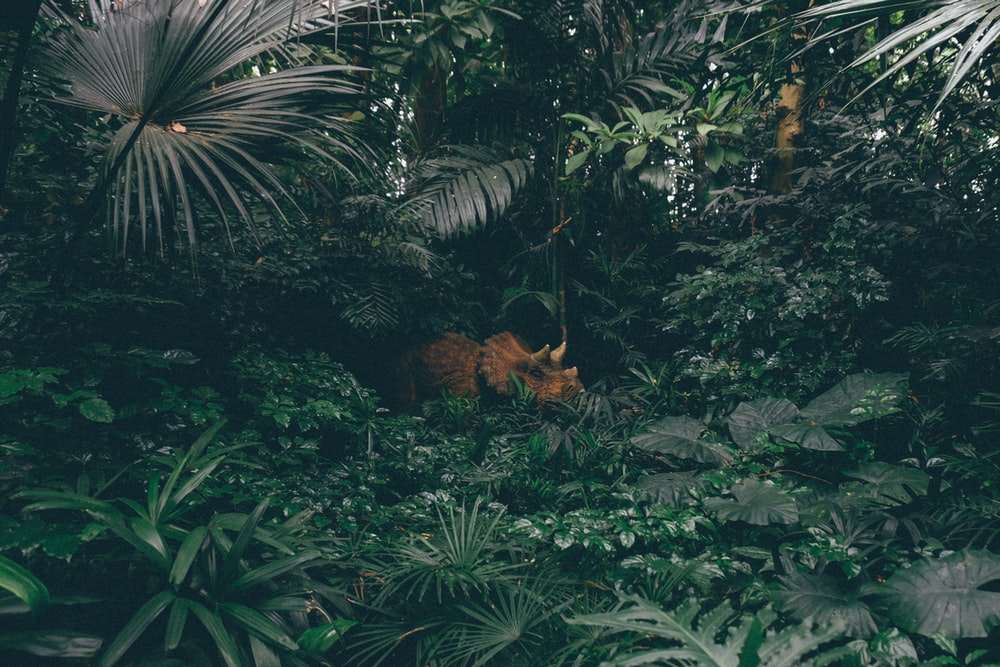 brown triceratops surrounded by plants