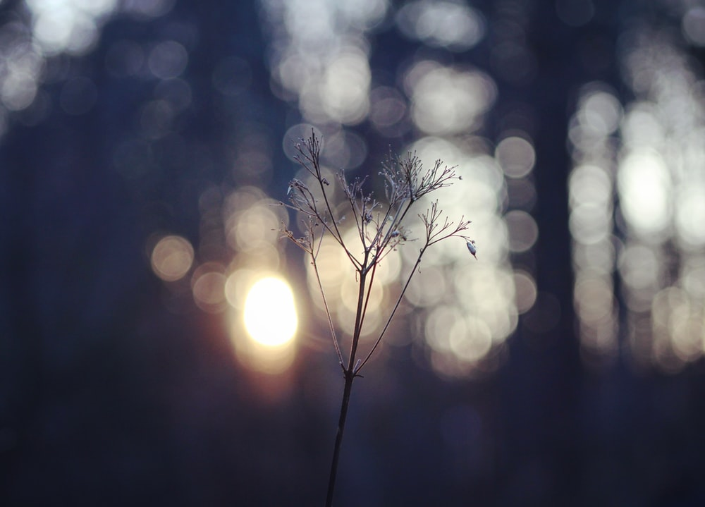 leafless bush with bokeh photography background