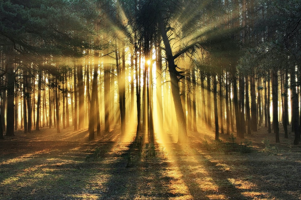 sun rays through trees