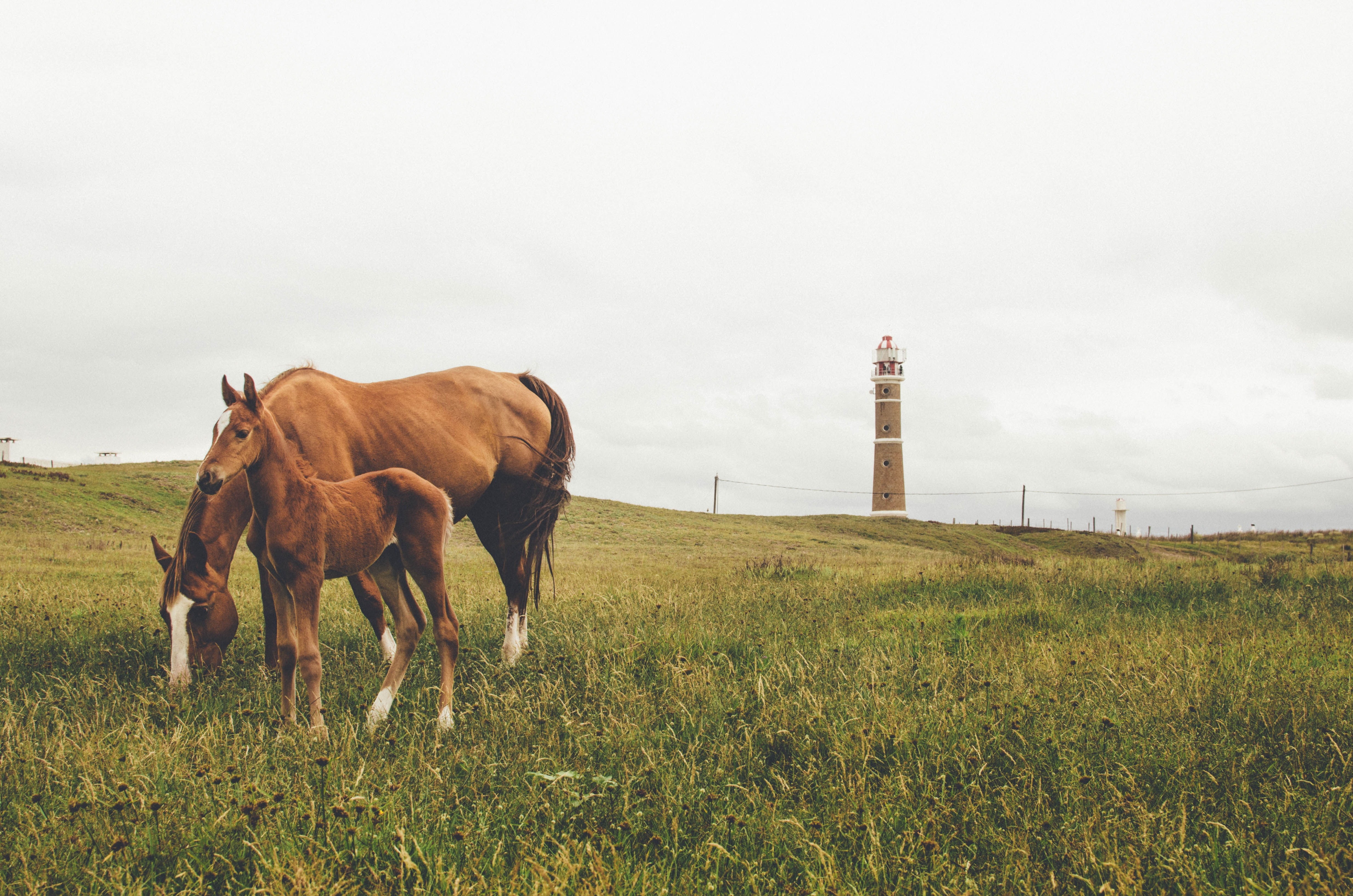 two brown horse and young horse on grass field