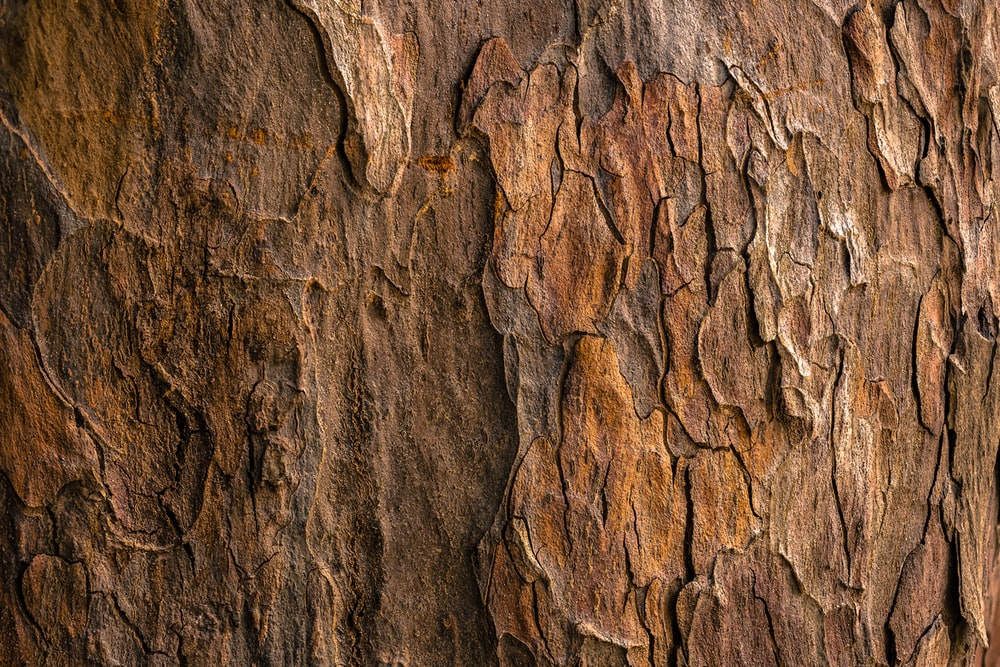 brown tree bark in closeup photography
