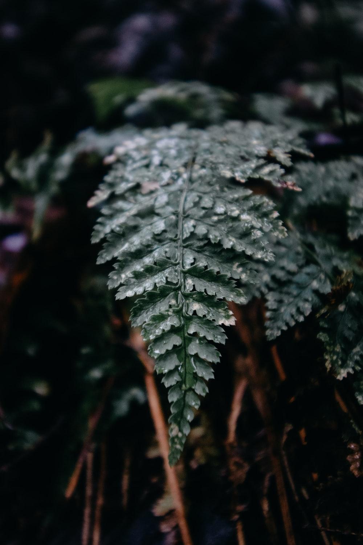 tilt shift photography of green leaf plant