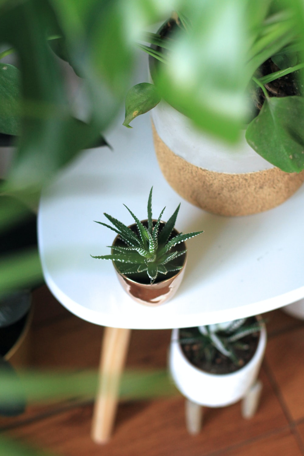 selective focus photography of green aloe vera plant on coffee table top