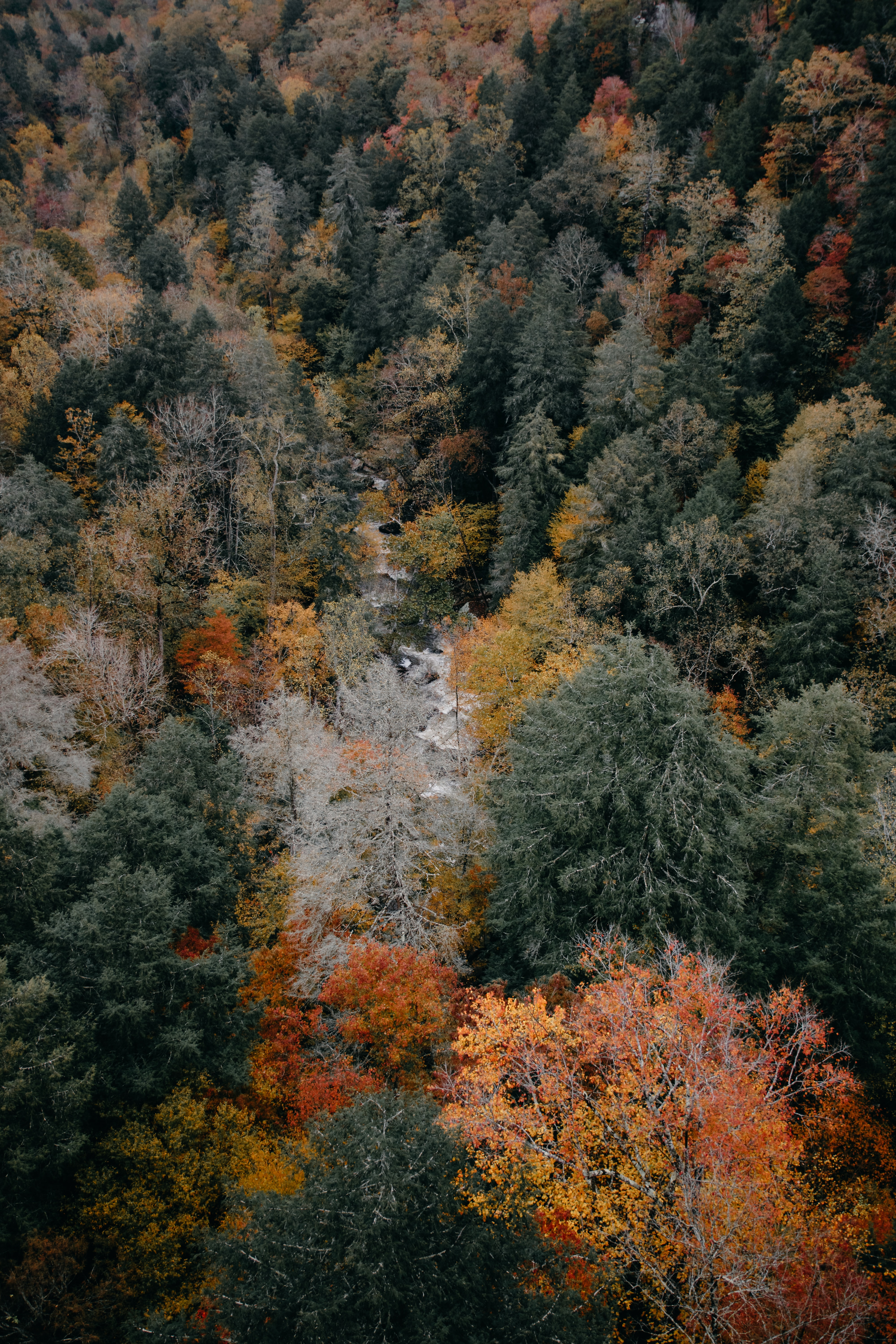 aerial photography of woods