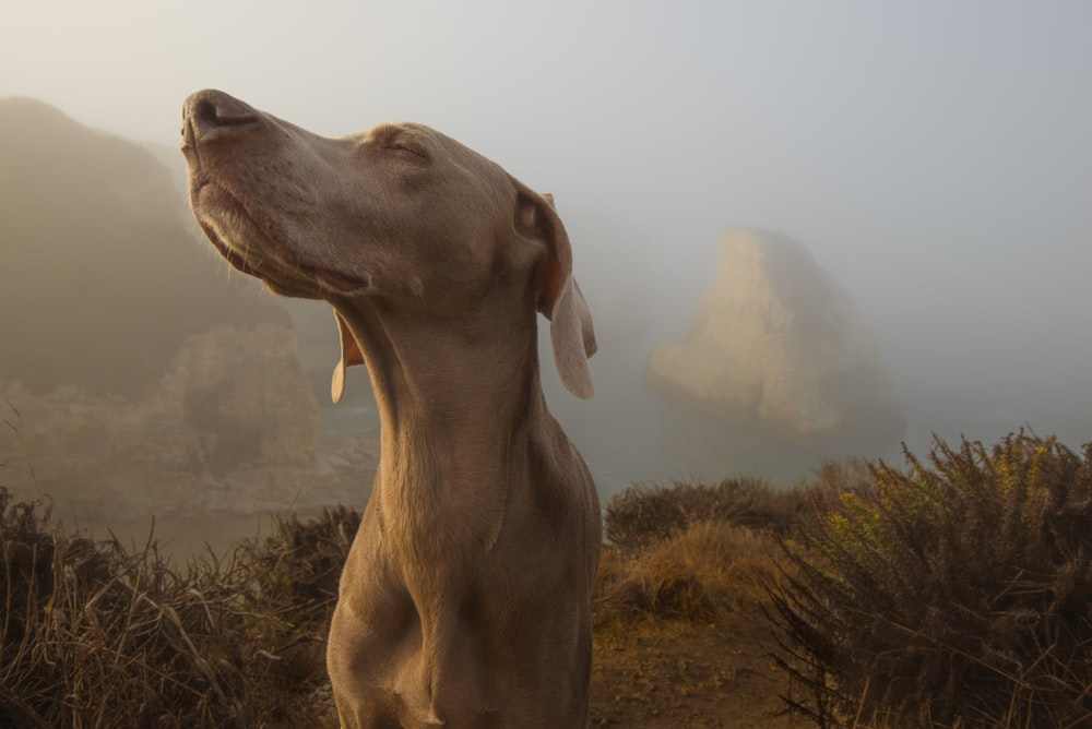 selective focus photography of brown dog on top of cliff