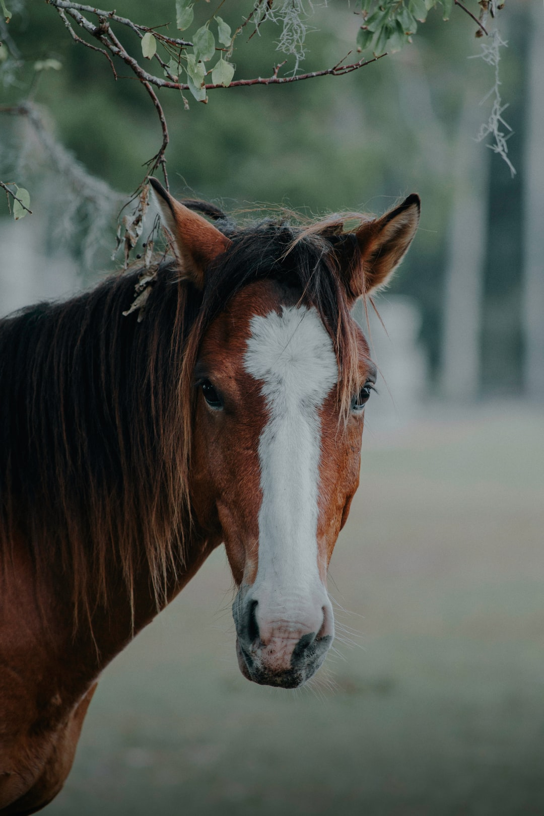 Why Don't Wild Horses Need Their Hooves Trimmed?