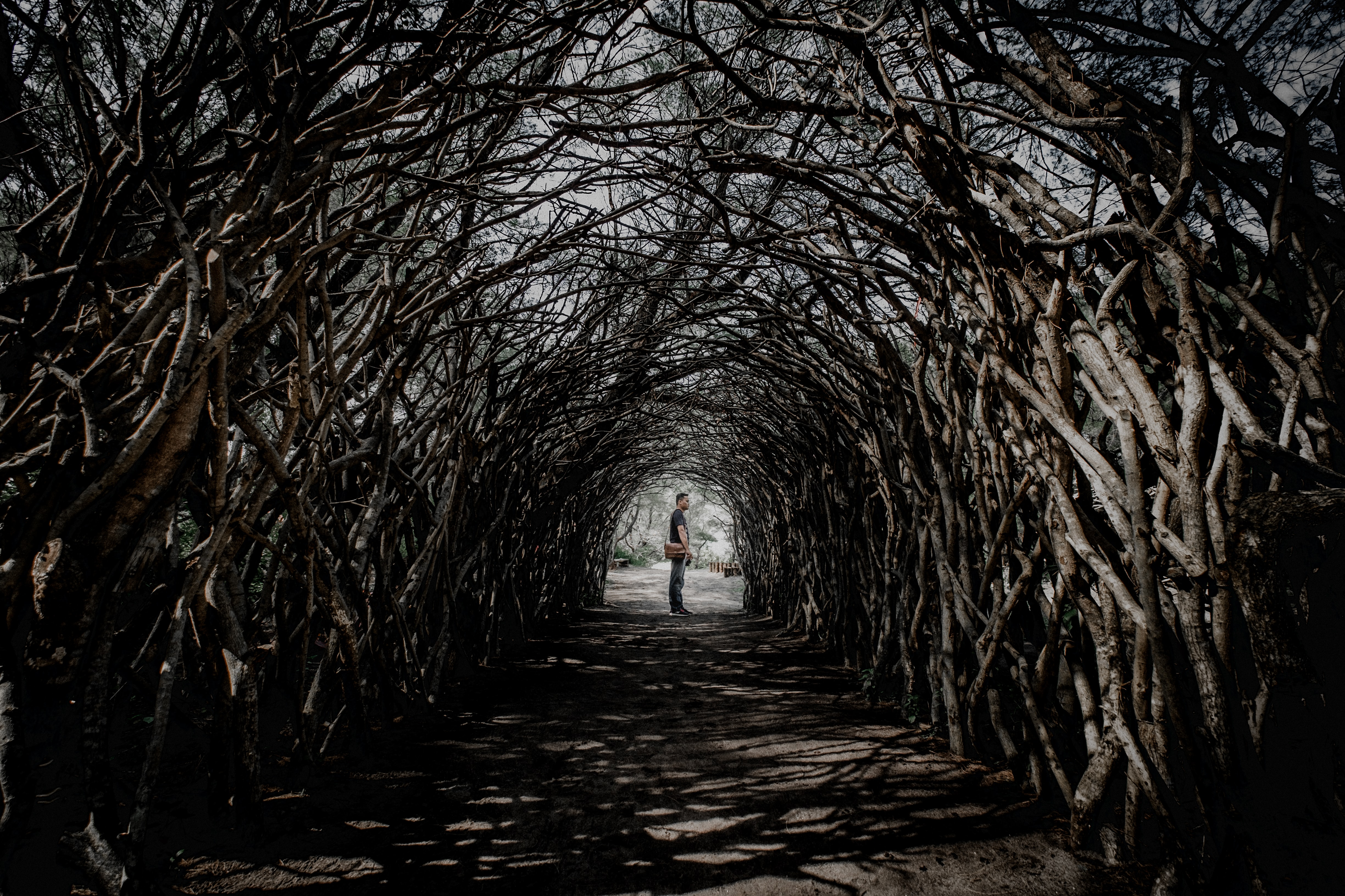 man standing in middle of bare tree pathway during daytime