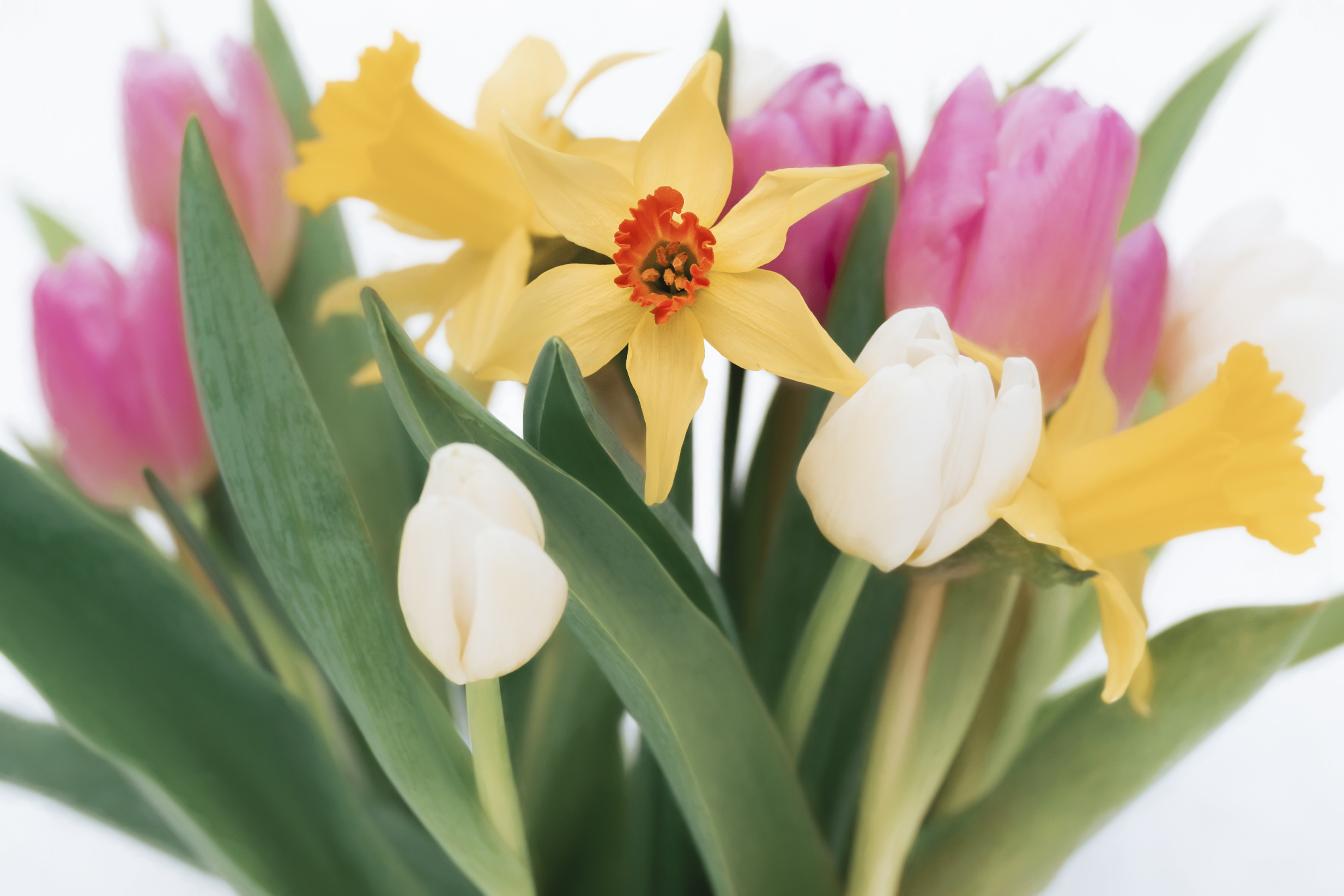 selective focus photography of tulip and daffodil flower arrangement