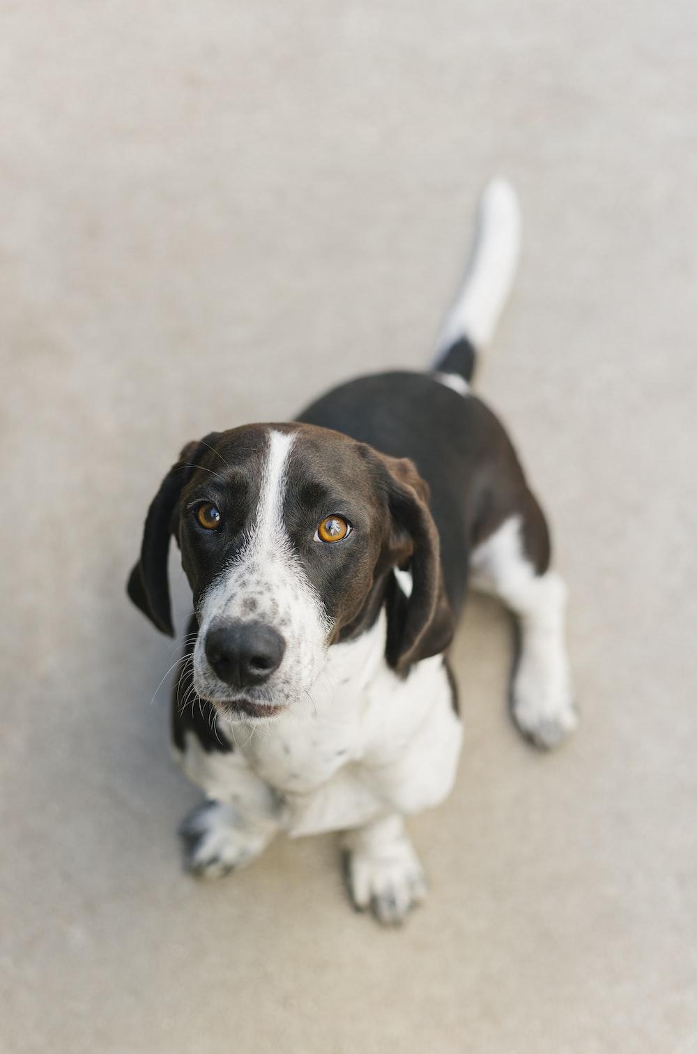 macro shot of brown and white dog