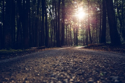 low-angle photography of road between inline trees backdrop zoom background
