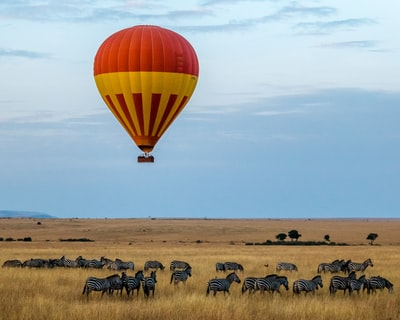 red and yellow hot air balloon over field with zebras kenya zoom background