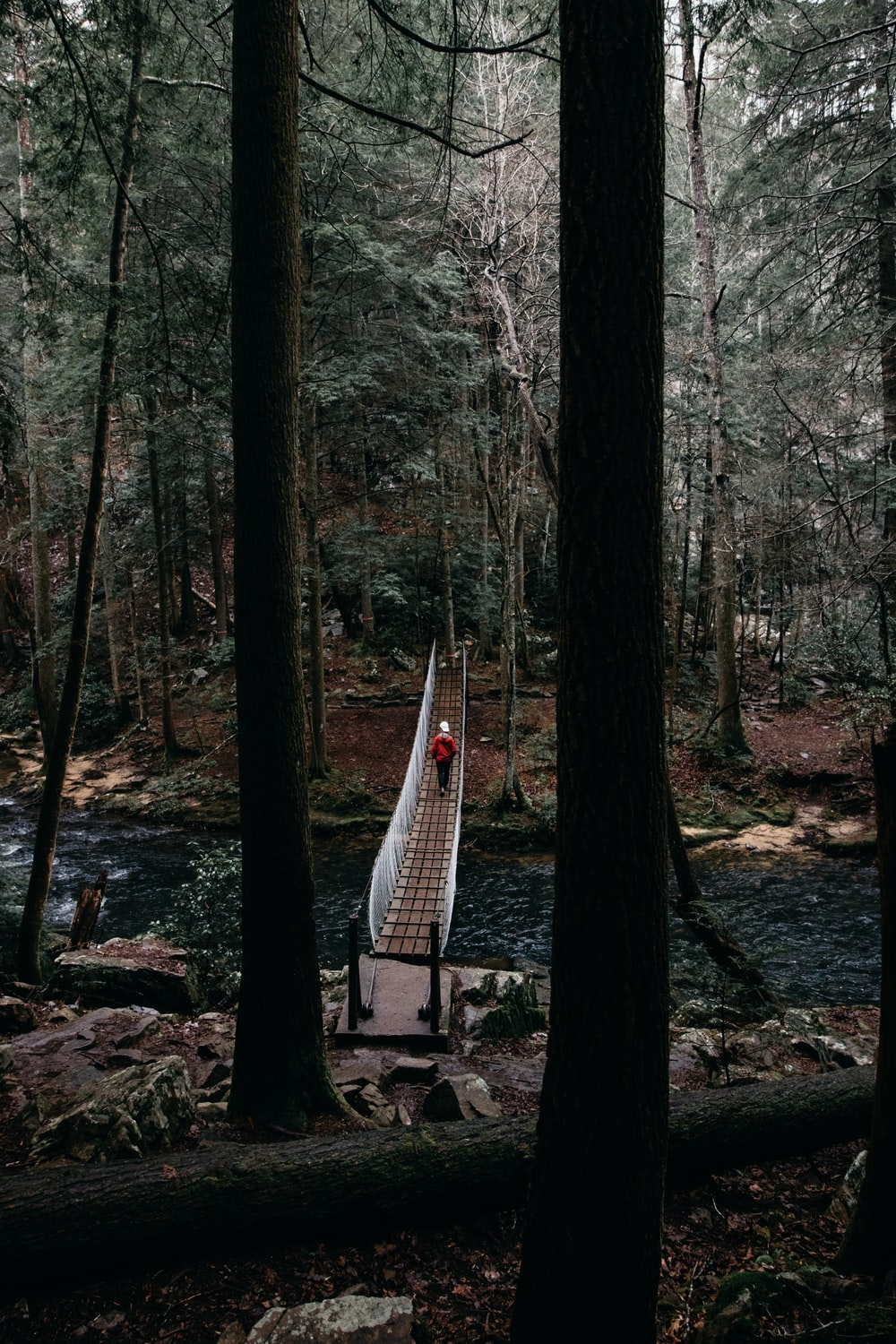 person walking on hanging bridge surround with trees