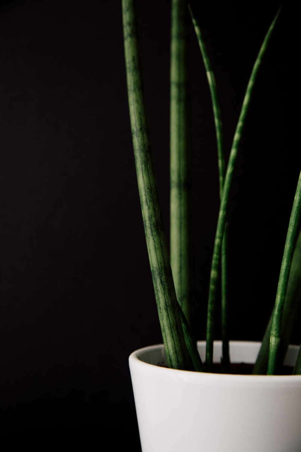 5 Most Amazing Plastic Plant Box You Can Buy