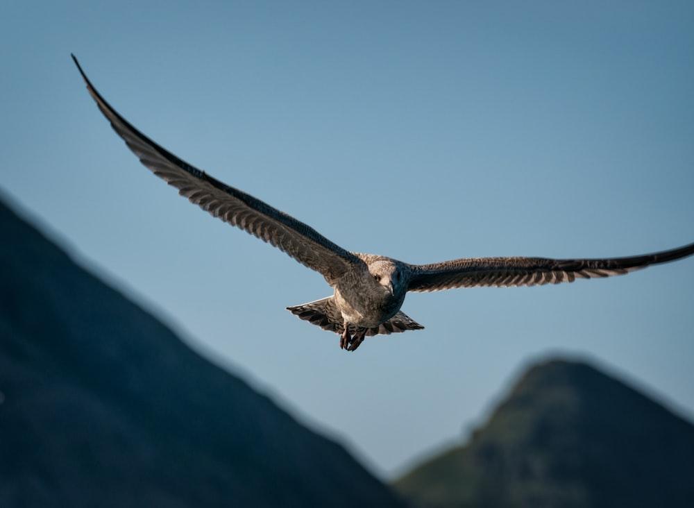 eagle flying on sky