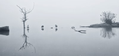 Foggy day on the pond.