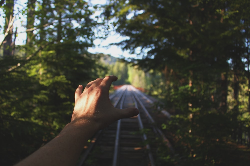 person reaching train railways between trees