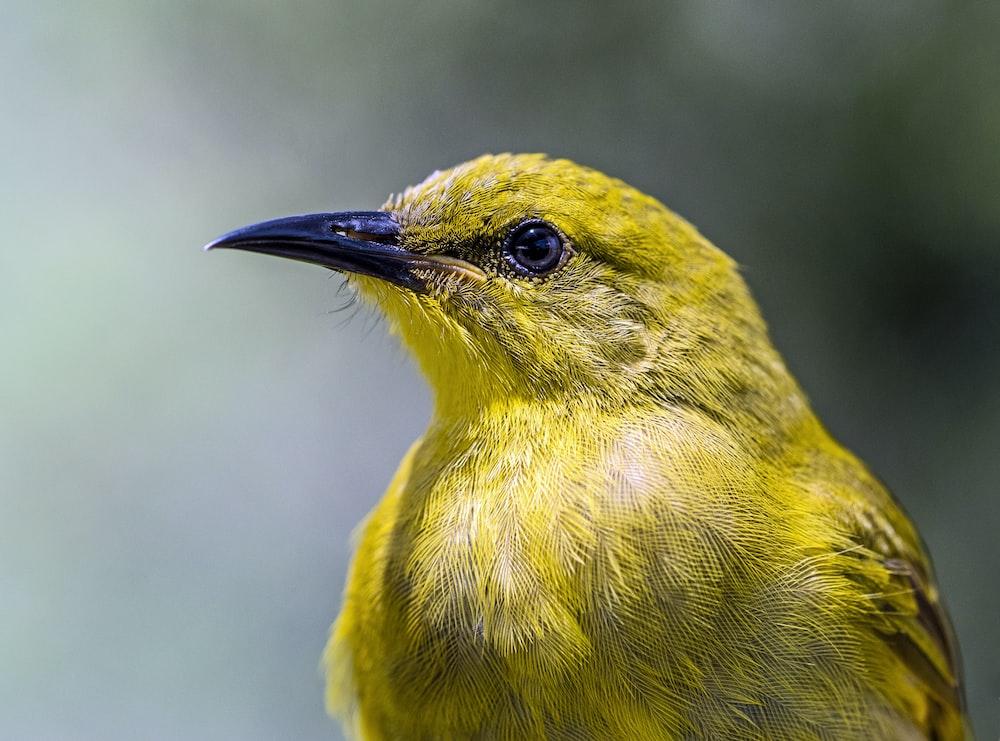 selective focus of yellow bird