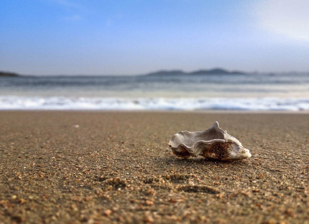 close-up photography of shell beside seashore