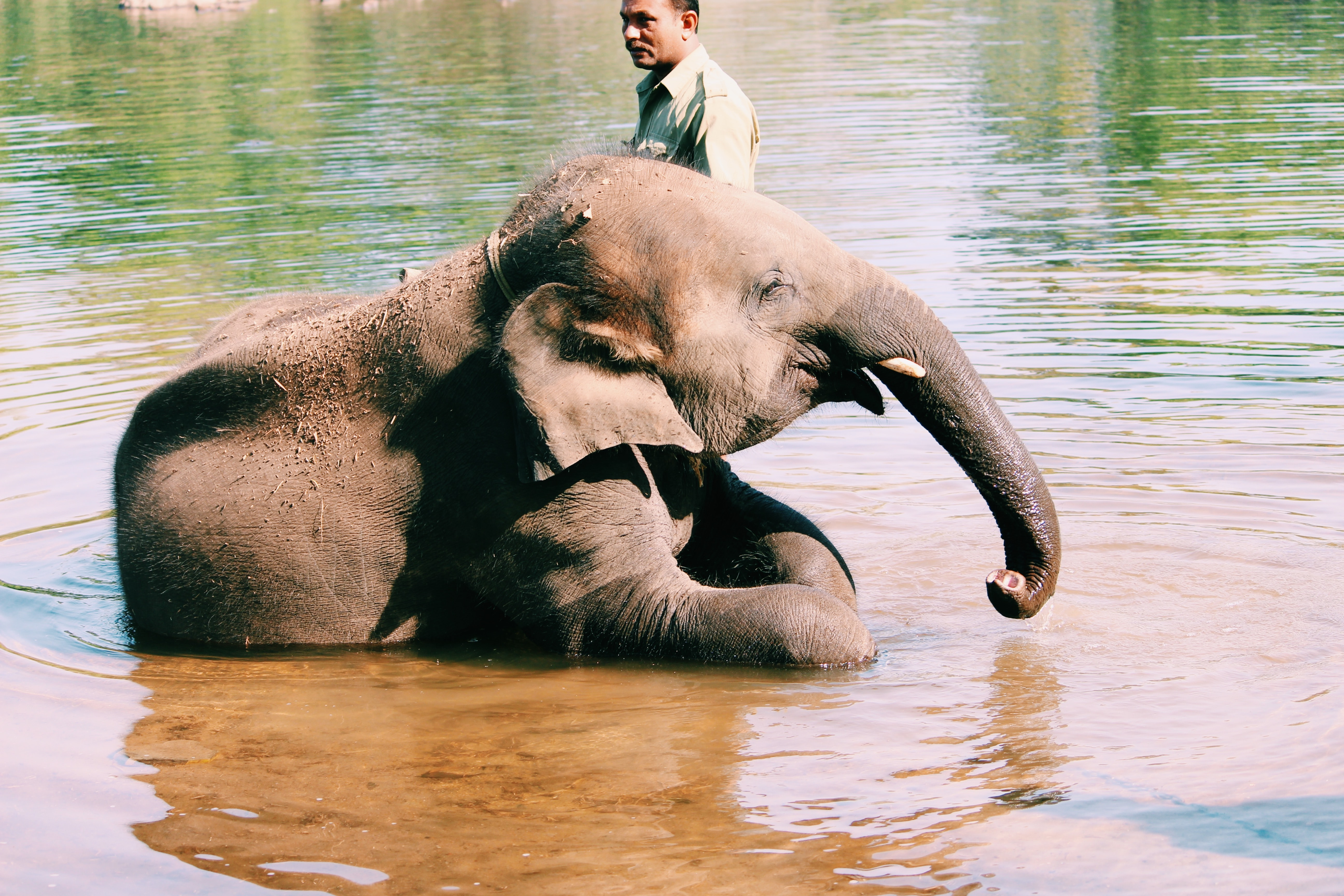 elephant lying on water beside man during daytime