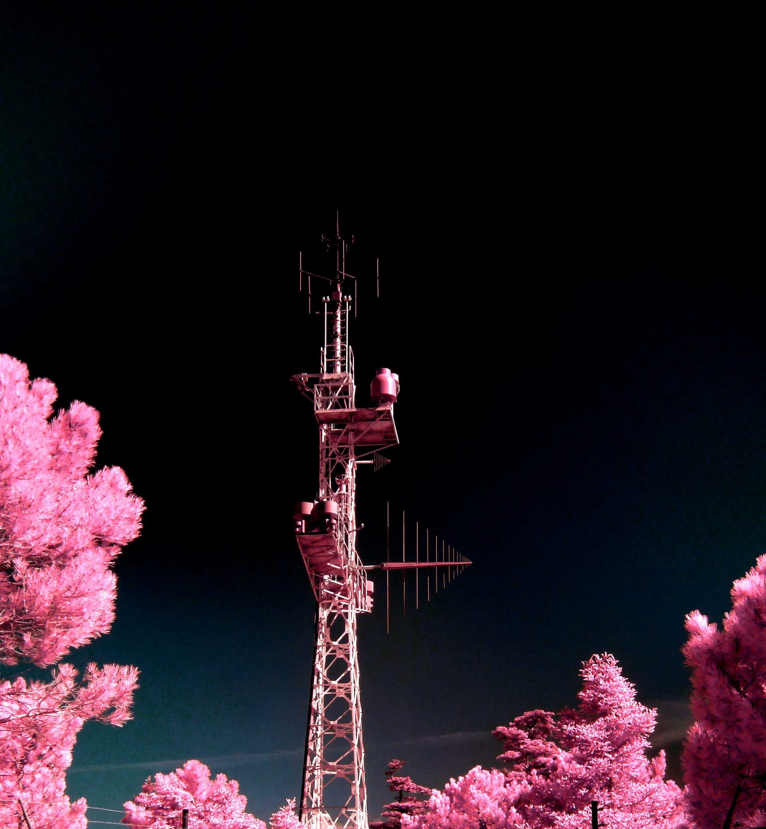 brown tower between pink leaf trees at nighttime