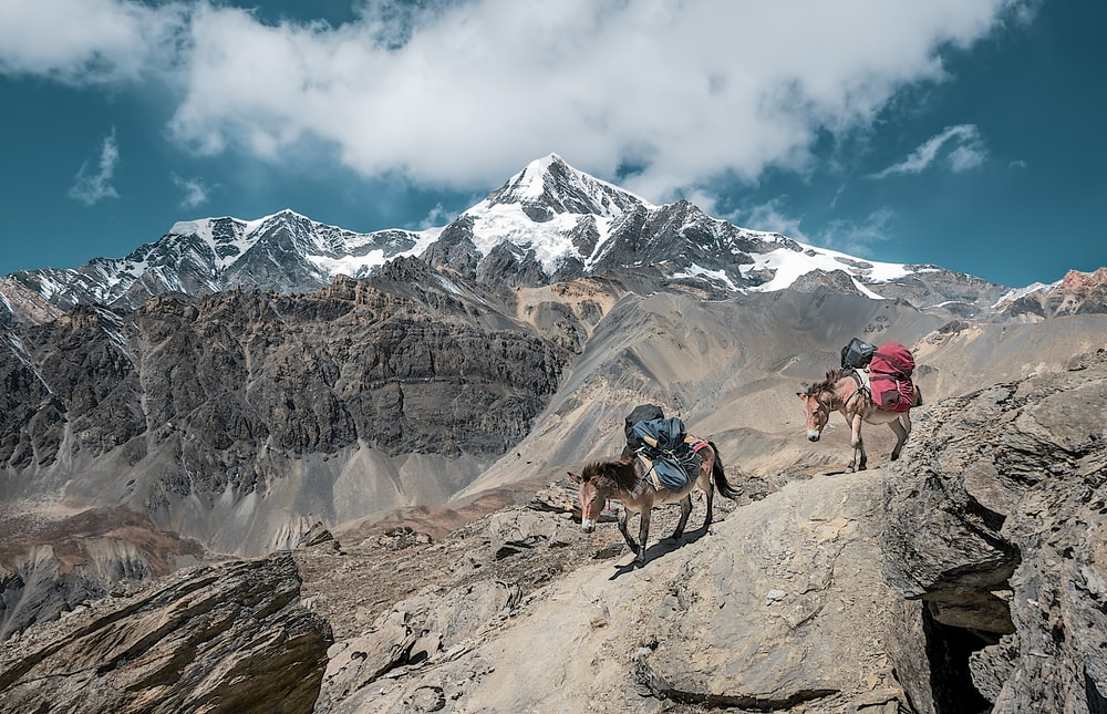 two donkeys walking on rock mountain carrying bags under cloudy sky