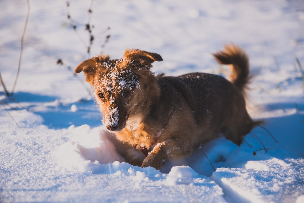 brown dog walking at road covered with snow