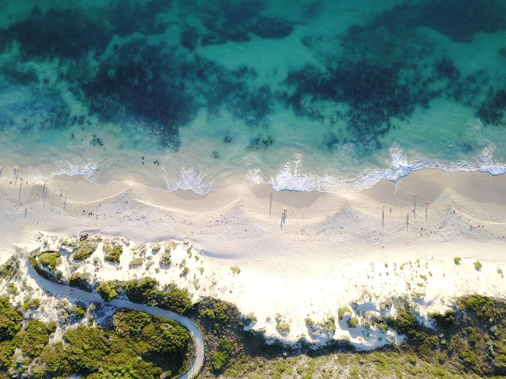 aerial view of ocean beside trees during daytime