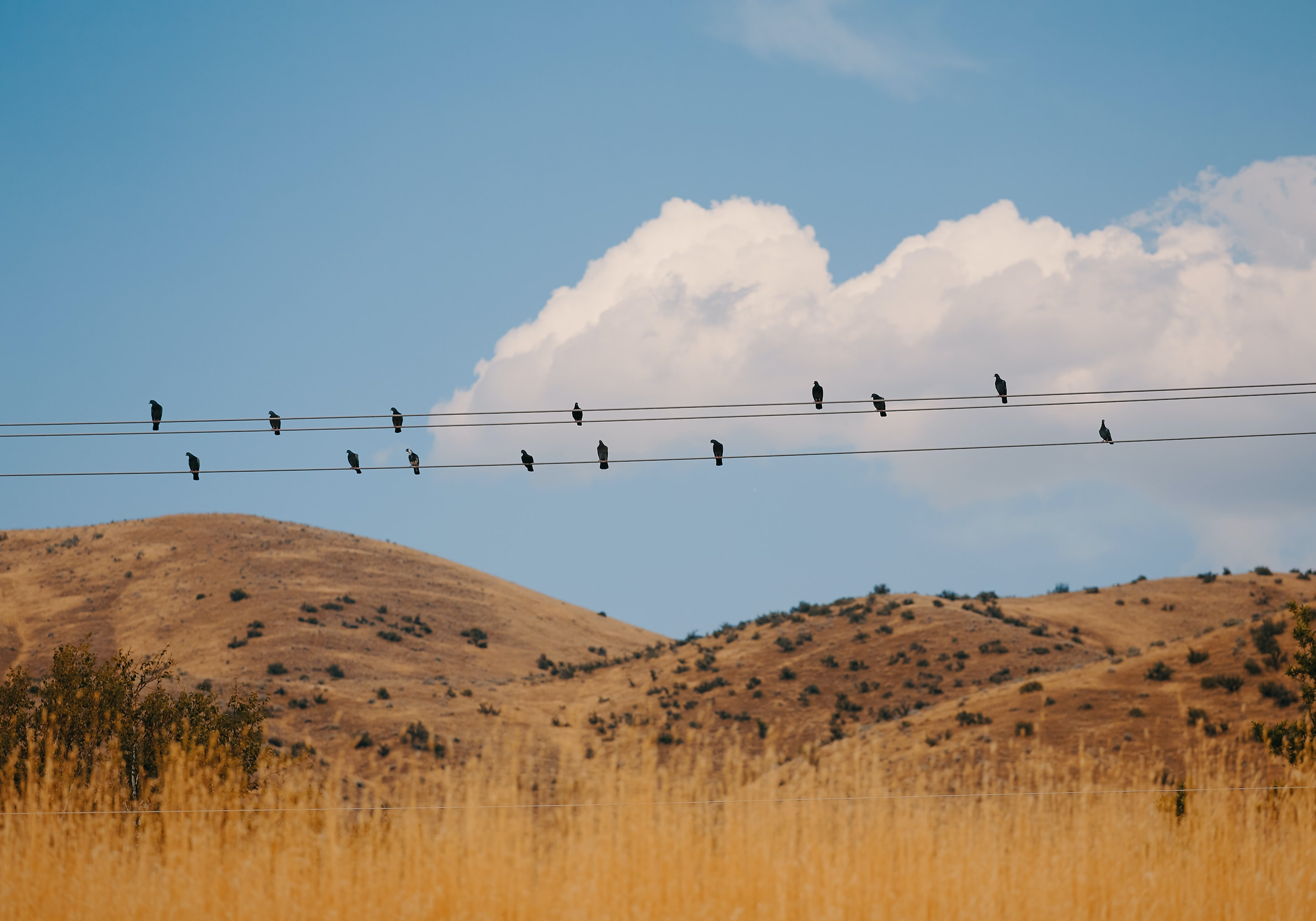 flock of birds sitting on electric cables during daytime