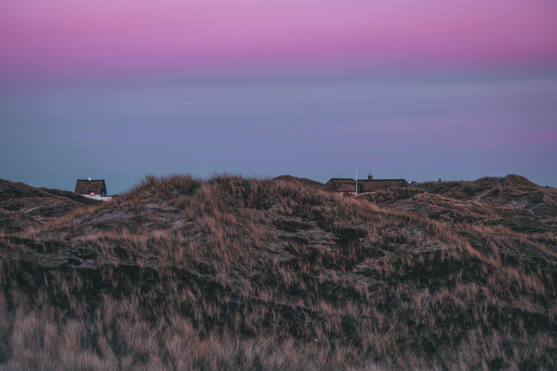 landscape of grass field during dusk
