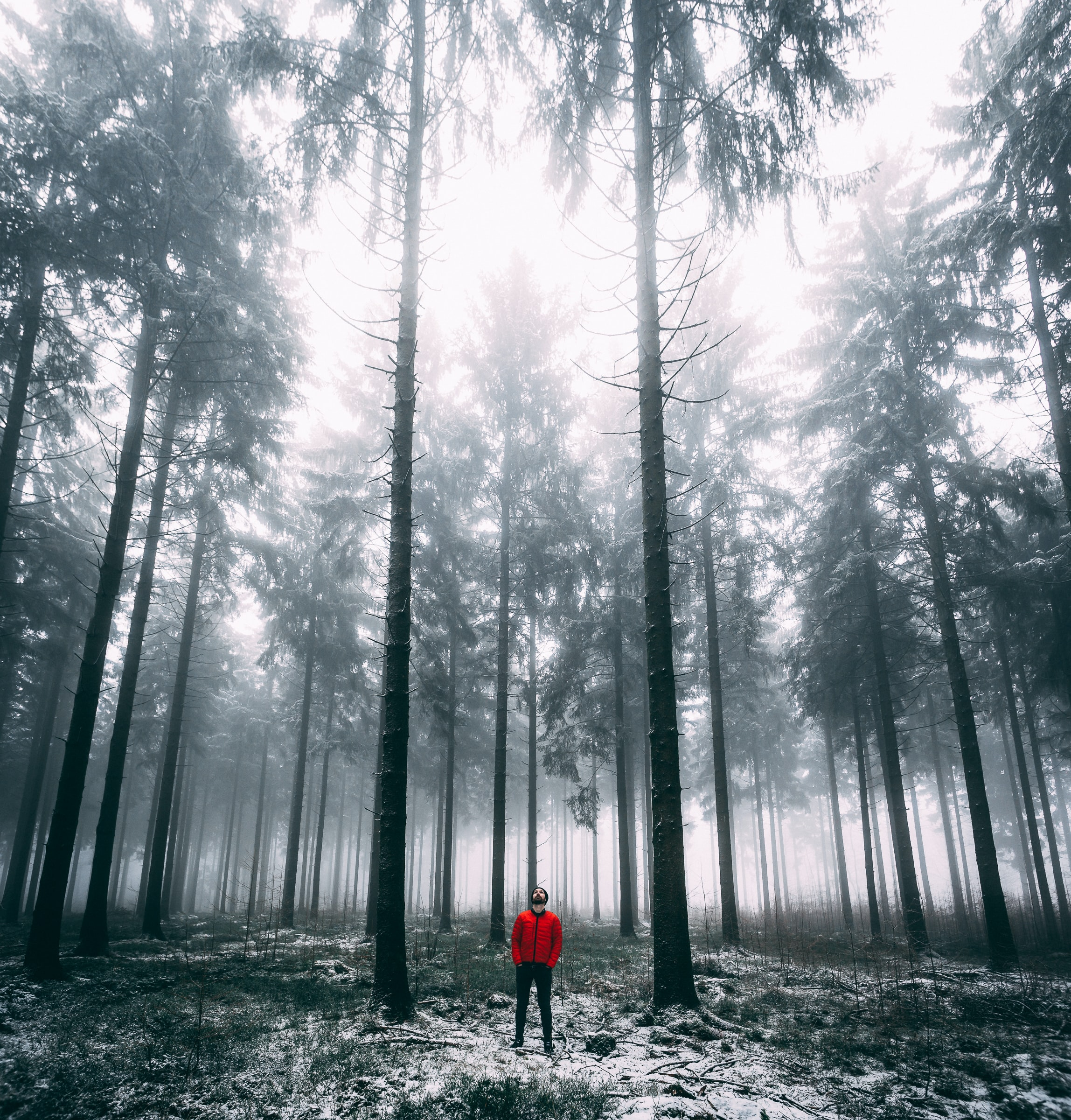 man standing on forest