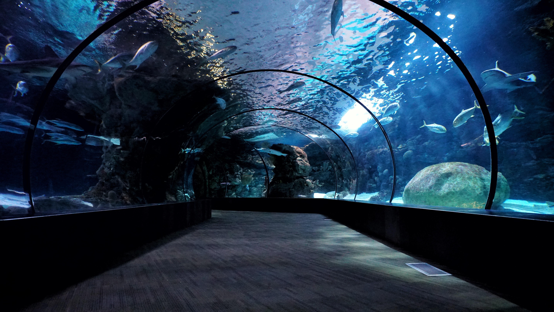 aquarium hallway