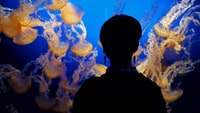 silhoutte of a person looking to a jellyfishes