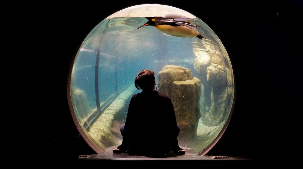 person wearing black shirt siting watching penguin swims