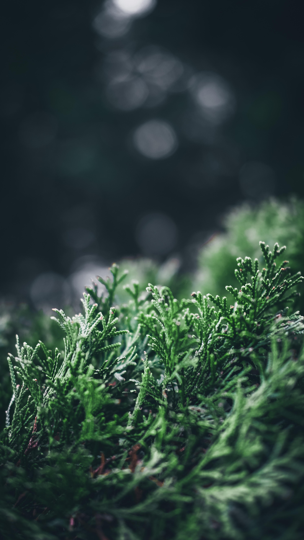 green leaves bokeh photography
