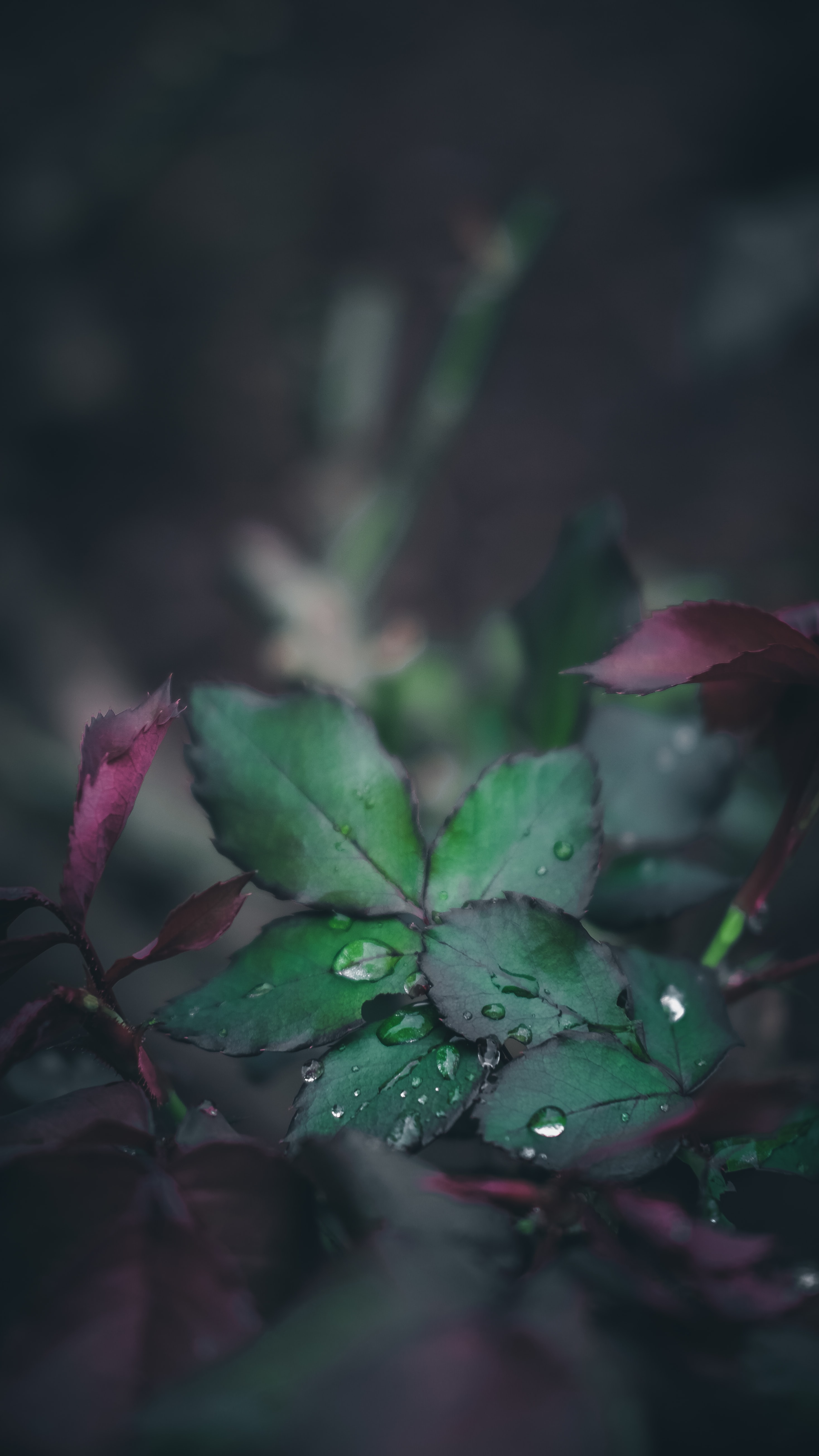 water drops on green leaf plant