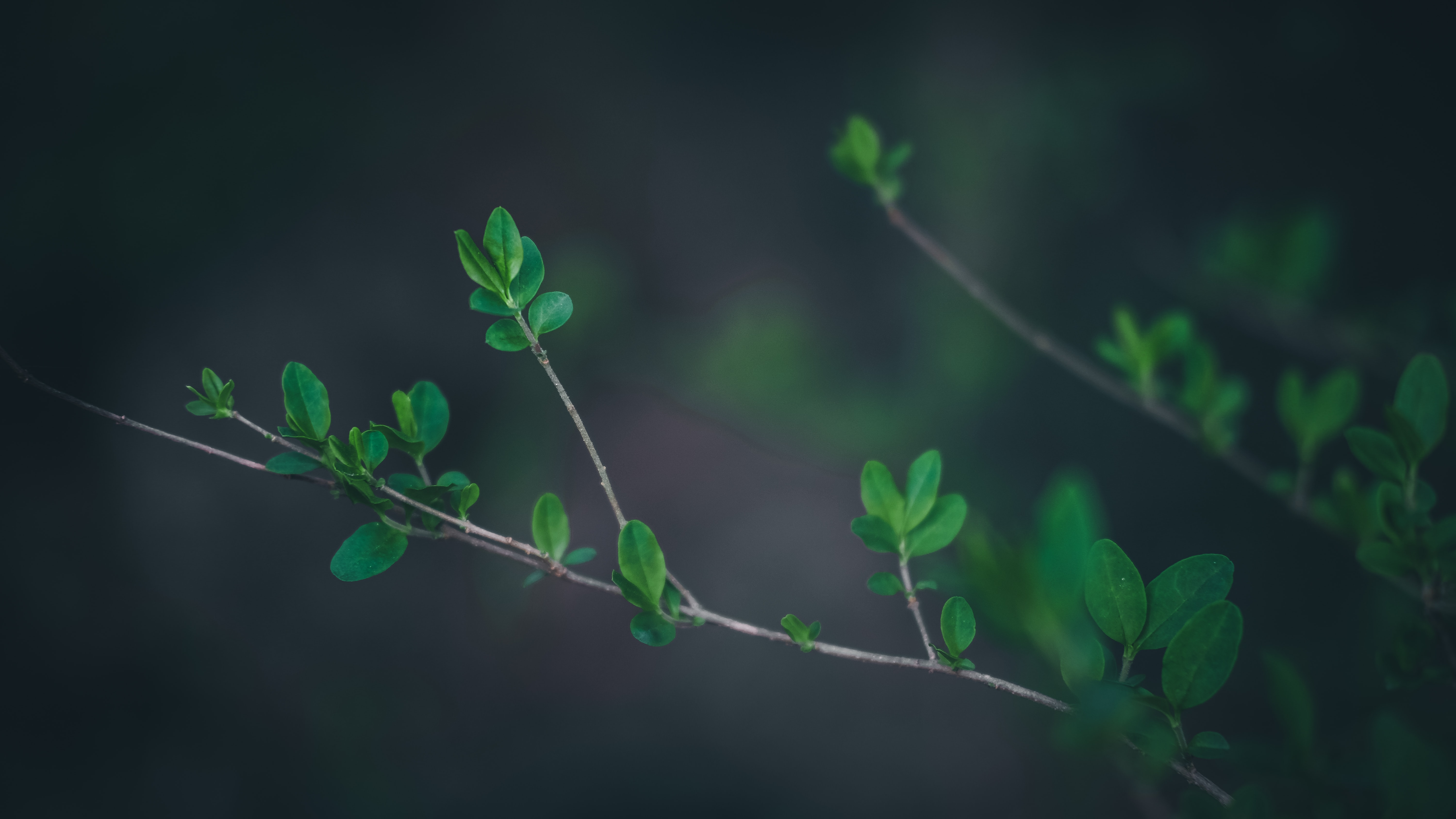 shallow focus photo of green leafed plant