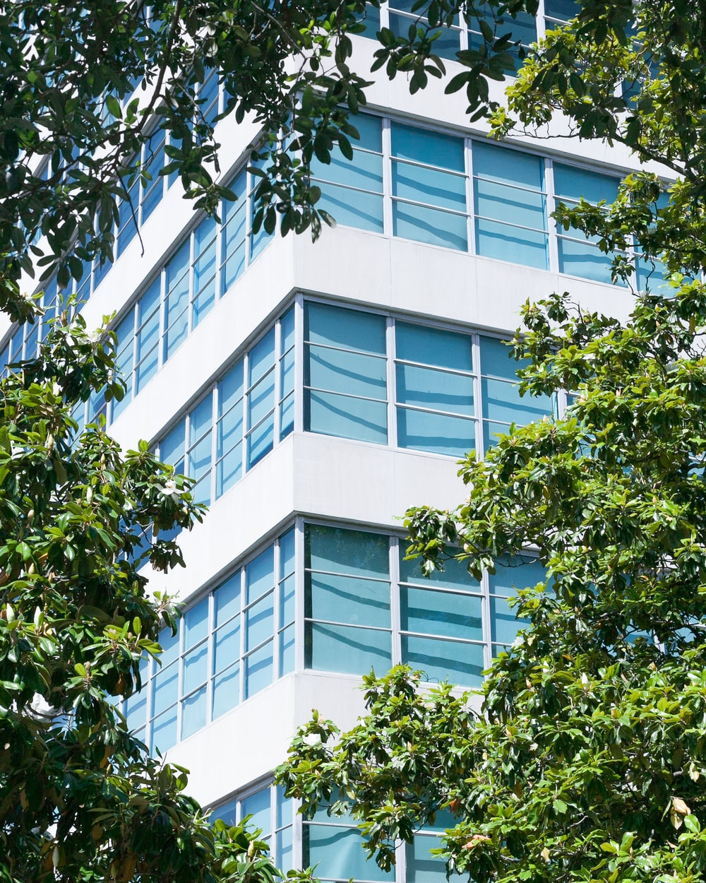 corner side of high-rise building between trees