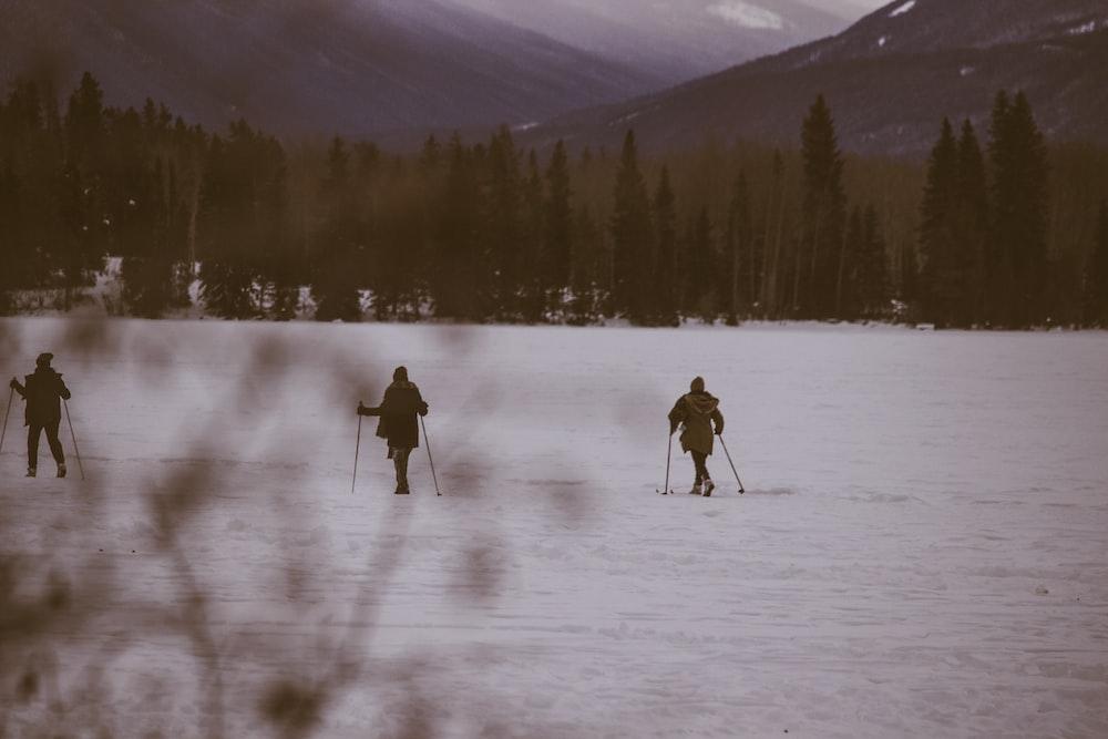 three person skiing on snow near trees