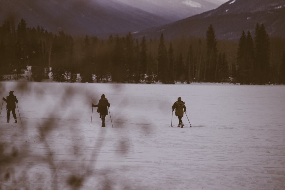 three person skiing on snow near trees