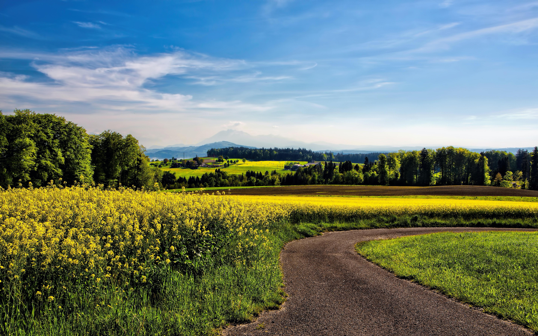 winding road beside field of yellow petaled flowers
