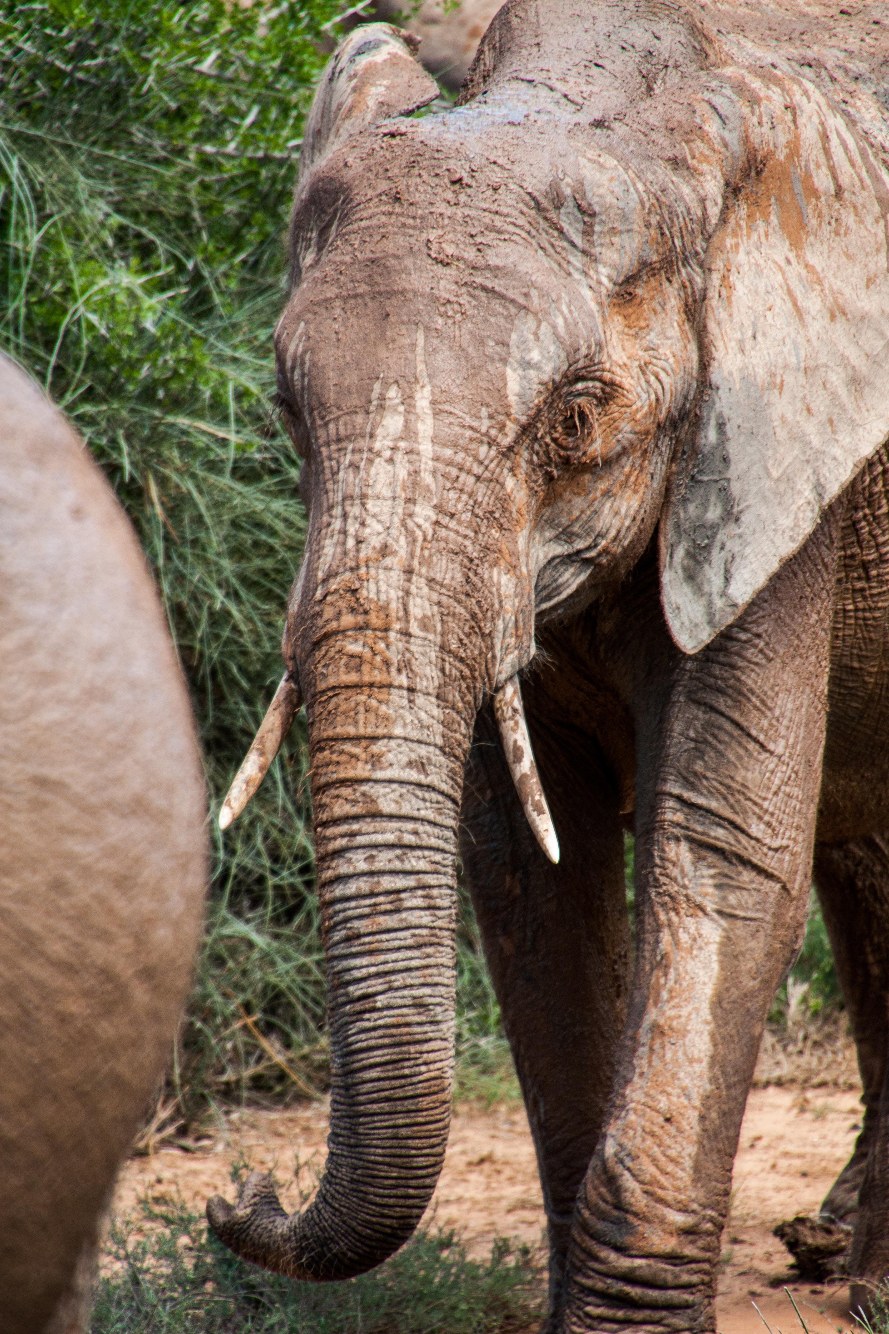 elephant near grass