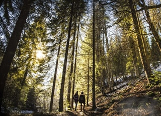 two person standing under forest trees at daytime