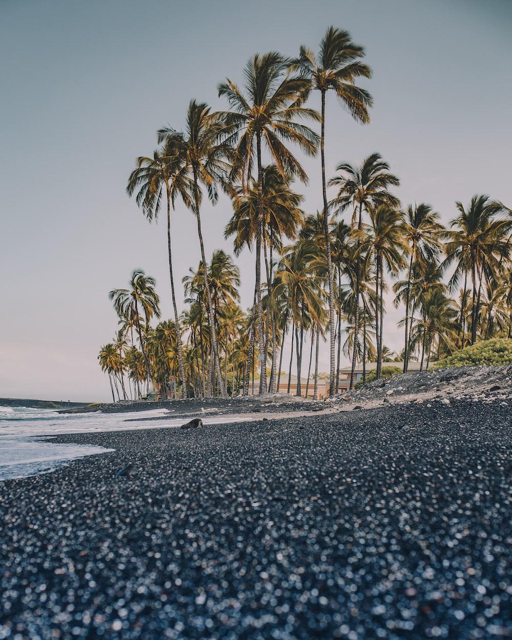 palm trees beside seashore