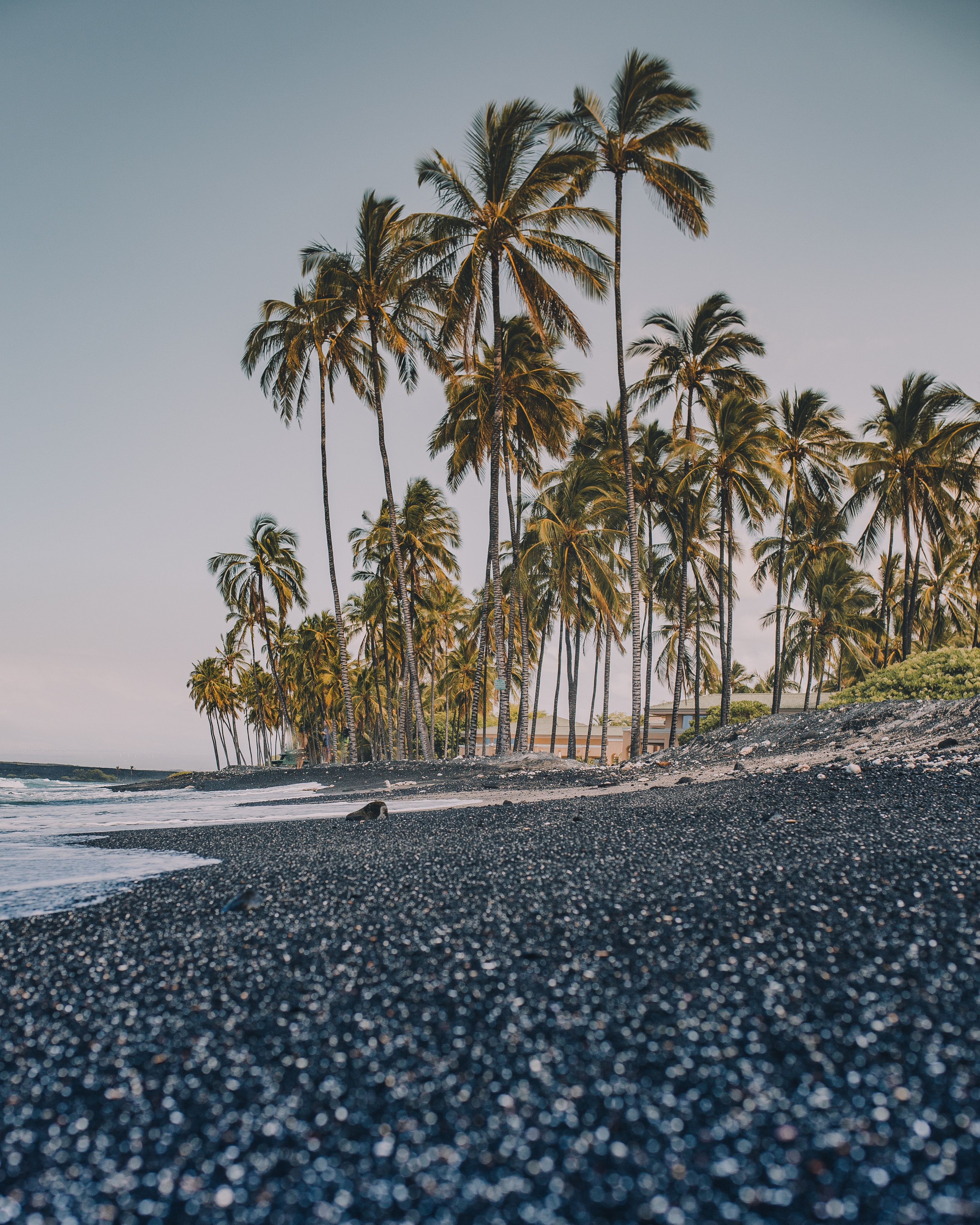 palm trees beside seashore